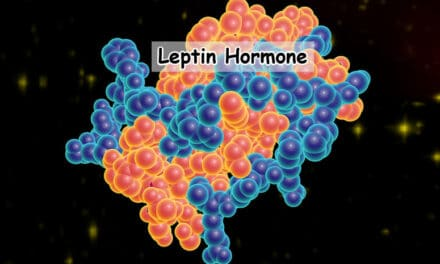 Leptin Hormone: How Leptin Makes You Less Fat? [Updated 2021]