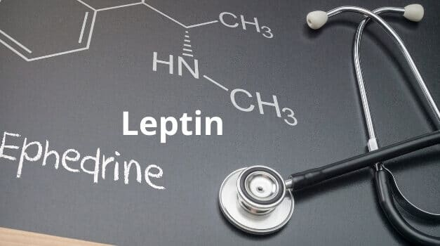 Leptin and Sympathetic Nervous System: Best Detail in 2021
