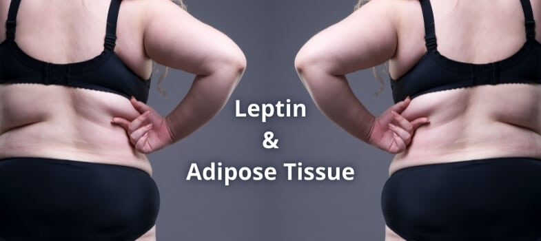 Leptin and Adipose Tissue